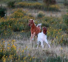 Two foals a Dashing #2 by Chris Snyder