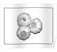 Garlic - (3) Poster