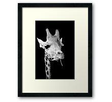 black and white giraffe Framed Print