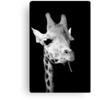 black and white giraffe Canvas Print