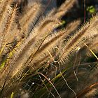 Gorgeous Grasses by coffeebean
