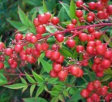 October berries by tanithastlik