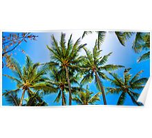 PalmCove - Coconut Trees at Midday 1 Poster