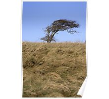 Windswept - South Downs Way, Eastbourne, East Sussex Poster