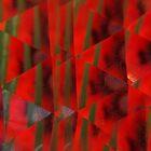 Wild Poppy Serie n°6 by edend