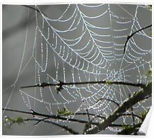 Moxie Lake - Newport, Maine, Spider Web Poster