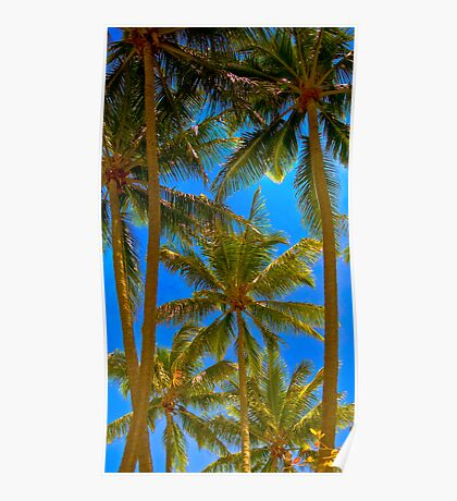 PalmCove - Coconut Trees at Midday 3 Poster