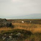 Rombalds Moor 3 by WatscapePhoto