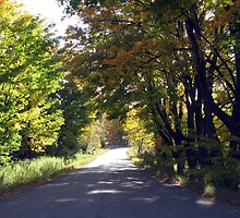 Country Drive In Trent Hills by nikspix