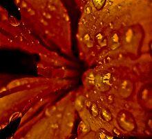 red water by Daniel Weeks