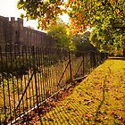 Rusty Fence in the Autumn Sun by Stanley Tjhie