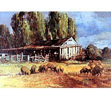 Old Slab Yards and Sheep - Australian Rural Scene  Photographic Print