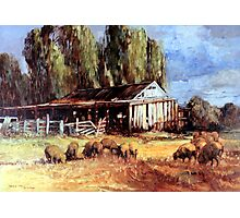 Old Slab Yards and Sheep - Australian Rural Scene  Photographic Print