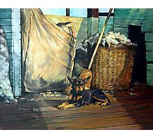 The Master of the Shed - Australian Kelpie series Photographic Print