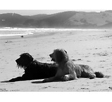 Briard Beach Bums #1 Photographic Print