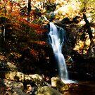 Peavine Falls by Phillip M. Burrow