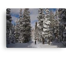 Nordic Skiing after snowfall Canvas Print