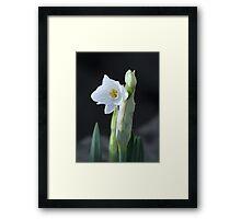 Daft -o-dil Framed Print