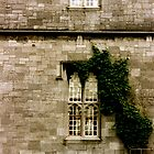Ivy Covered Wall, County Galway by Laura Dandaneau
