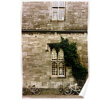 Ivy Covered Wall, County Galway Poster