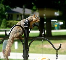 Squirrel-y Visitor by Lorraine Armstrong