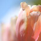 Pastel Dreams by Fiona Kersey