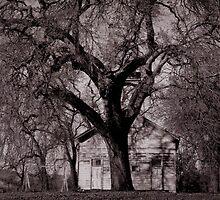 Old Schoolhouse by Barbara Wyeth