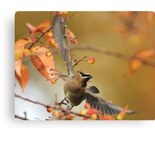 Berry Picker Canvas Print