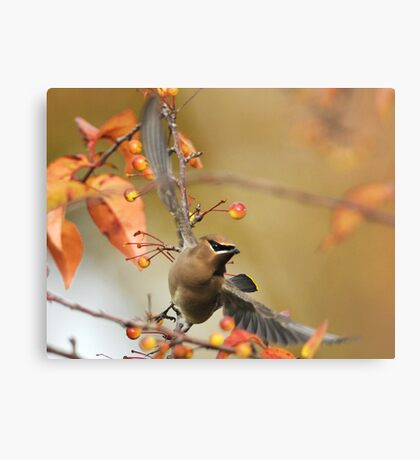 Berry Picker Metal Print
