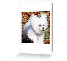 Flying Fur Greeting Card