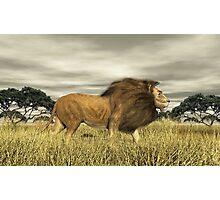 King of Beast. Photographic Print