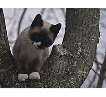 Cat gives a Rasberry Photographic Print