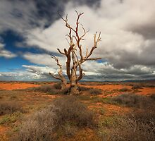 Dead Heart • South Australia by William Bullimore
