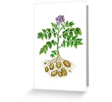 Potato (Solanum tuberosum) Greeting Card
