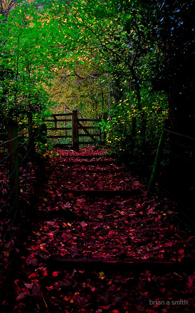 the path out by brian a smith
