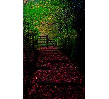 the path out Photographic Print
