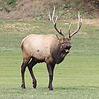 elk by theirishJoel