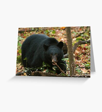 Preparing for a Long Winter's Nap... Greeting Card