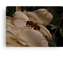 Bee Beauty Canvas Print