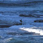 Lone Surfer by kelliejane