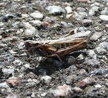 Grasshopper on the Road by CARL135