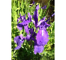 purple iris at a pond Photographic Print