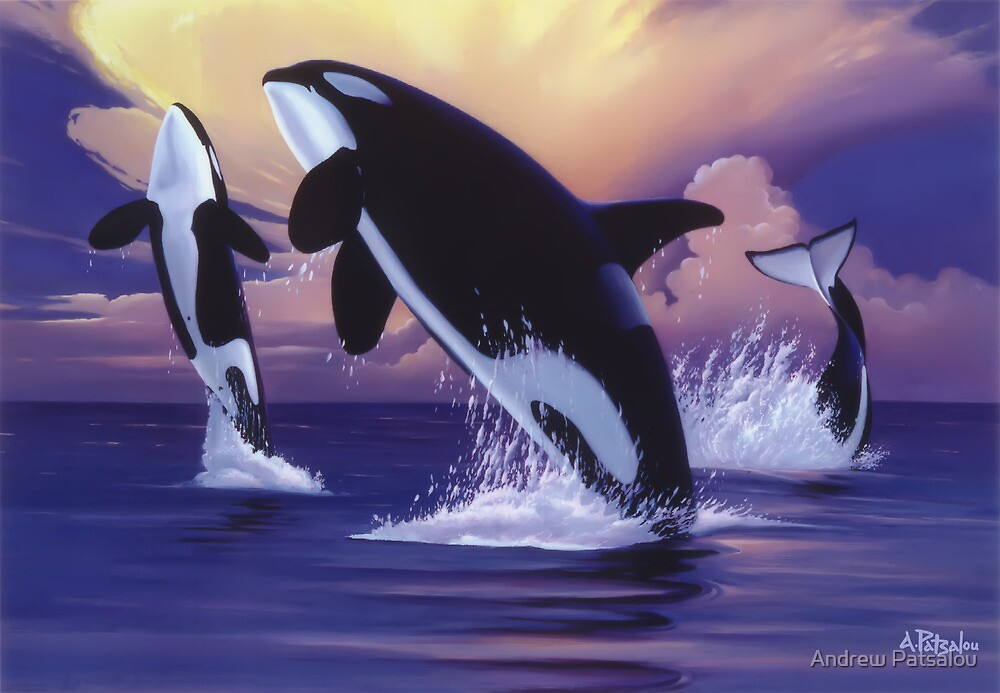 Killer Whales by Andrew Patsalou
