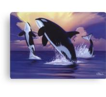 Killer Whales Canvas Print