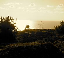 cows and a horizon by loritta