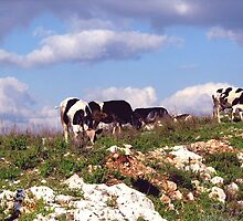 cows and clouds by loritta