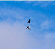 Soar Like Eagles and Never Grow Weary-Conowingo Dam Photographic Print