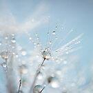 sparkle by Sue Hammond