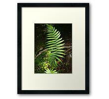 Sunshine Coast Fern Framed Print