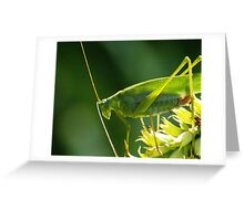 Grasshopper at sundown Greeting Card